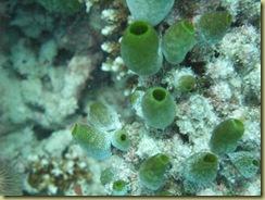 Scavenger Sponge-1