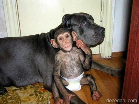 macaco e cadela8
