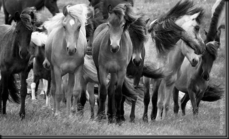 pm_20110625_horsesBW1_thumb