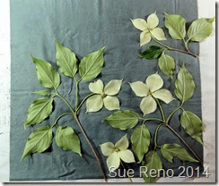 Kousa Dogwood, a work in progress by Sue Reno, Image 1