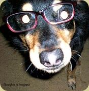 Brisco in glasses