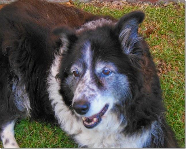 Bella 13 Years