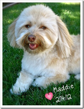 Maddie