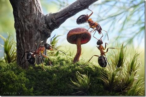 imagini cu furnici