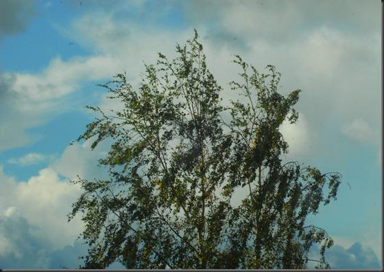 tuuli märkä ikkuna 003