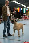 20130511-BMCN-Bullmastiff-Championship-Clubmatch-1591.jpg