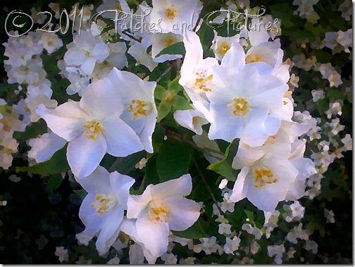 As flores do jardim