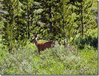 Yellowstone NP and Teton NP 014