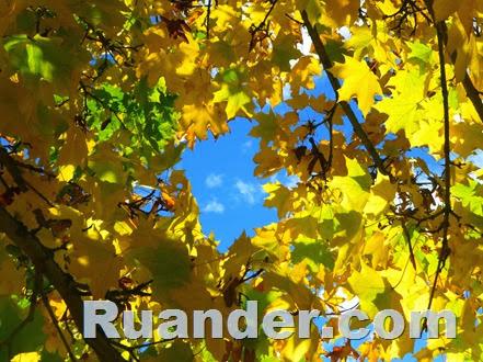 Fall Color 8 Ruander