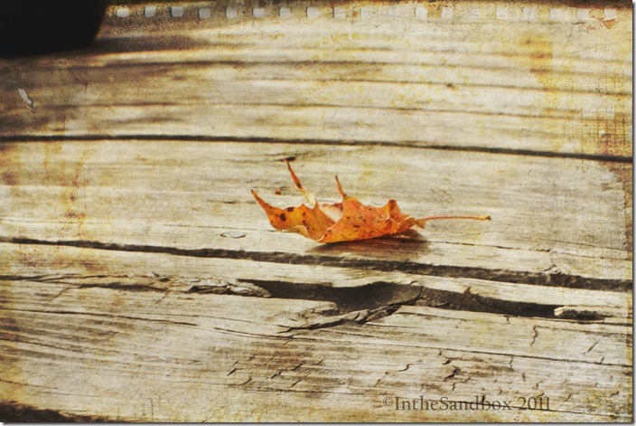 leaf with KK autumn burst and scripted texture logo