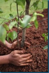 hands planting - touch