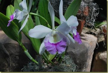 919 - Orchides