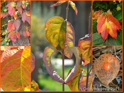 fall collage3