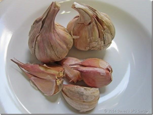 Duganski_garlic