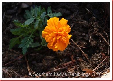 garden 2012 024