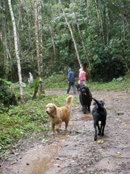 Dogs Trekking 4 (239)