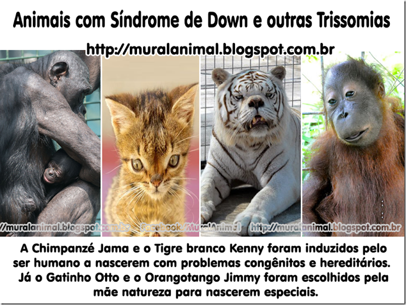 animais_down_trissomias