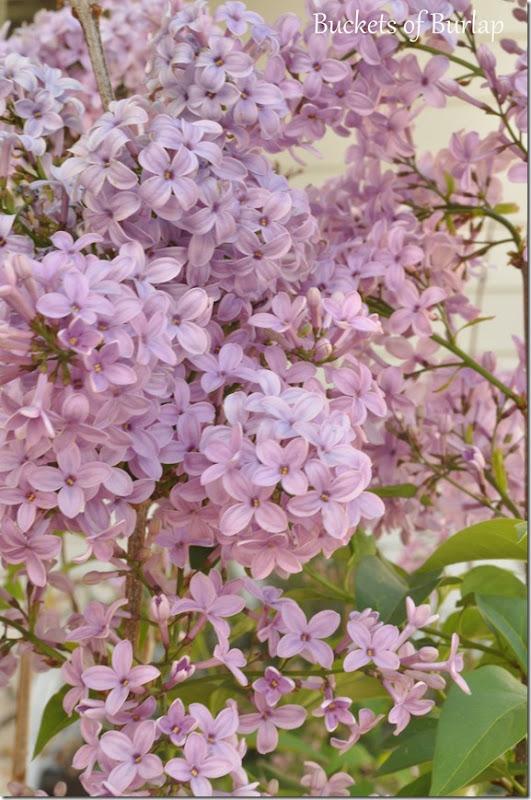 spring garden 9