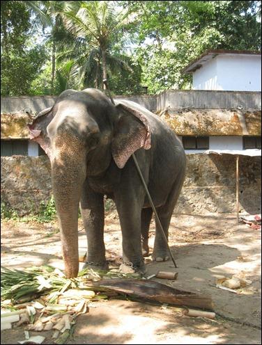 Elephant Sactuary VII