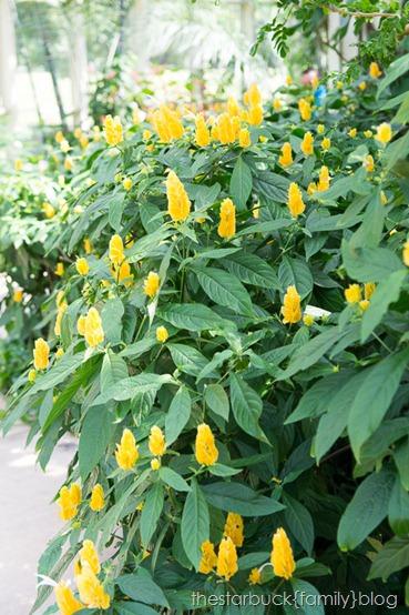 Callaway Gardens butterfly garden blog-26