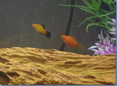 quads fish 6