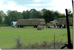 Loading up the hay