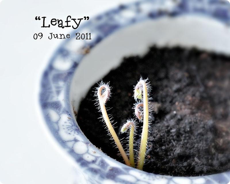 Leafy-Jun9