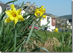 daffs4 and tweedview