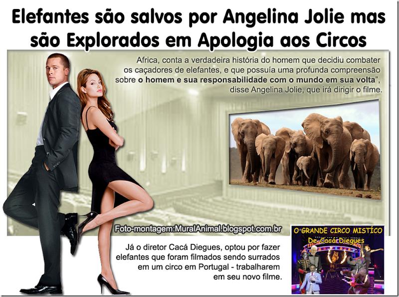 angelina_jolie_elefantes