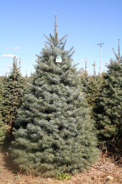 White Christmas Trees Ideas