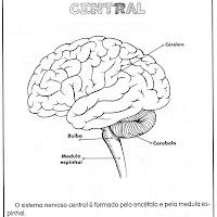 sistema nervoso central.jpg