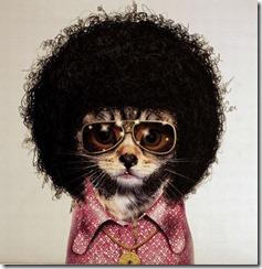 Afro_Cat