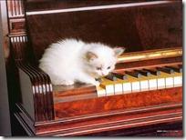 gato pianista blogdeimagenes (29)