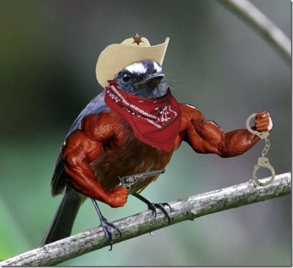 birds-with-arms-10