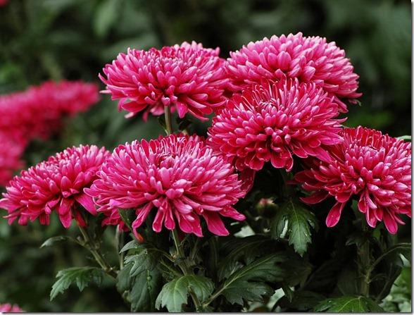 Resultado de imagem para imagens de flores no campo