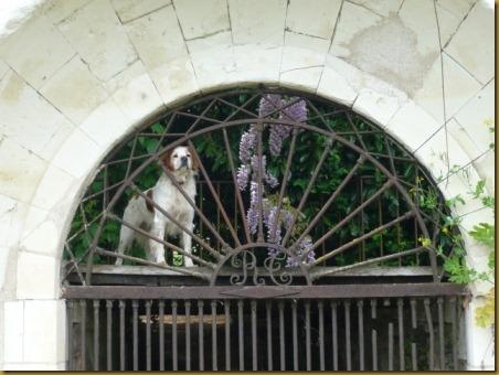 Descartes dog