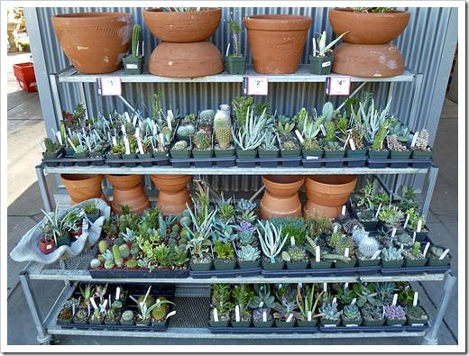 120822_DavisAce_succulents_02