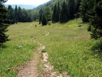 Planina Spodnja Grintovica