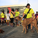 Pet Express Doggie Run 2012 Philippines. Jpg (225).JPG