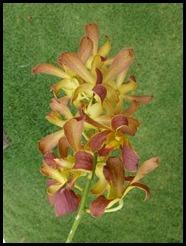 Malaysia, Kuala Lumpur, Orchid, 19 September 2012 (3)