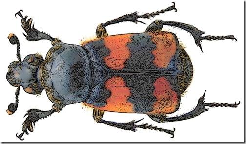 FotoSketcher - escarabajo