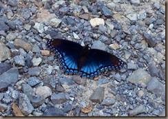 Butterfly_resize