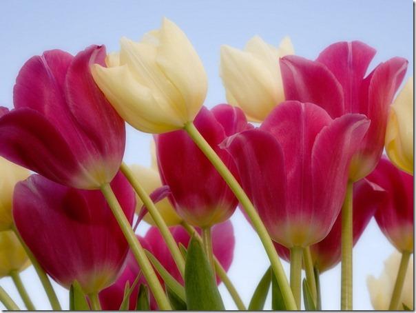 flor día del amor (43)