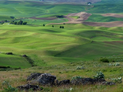 12 The Palouse 028