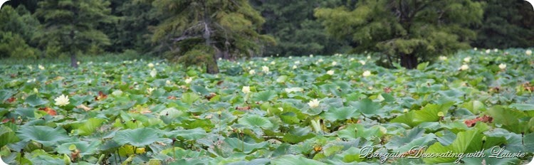 LILLY PADS 2