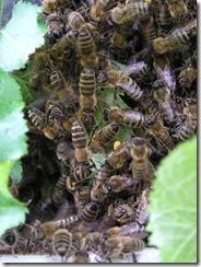 Rojení  a velikost včelstva 125