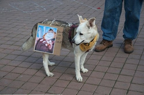 cute-pets-at-occupy-wall-street-17