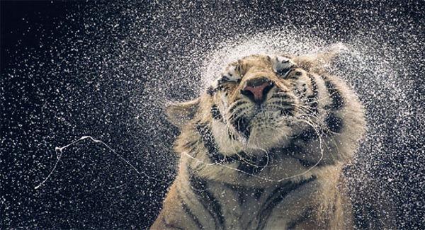 animais-carismaticos-desbaratinando (3)