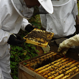 Bee Keepers by Marney Dainty - Nature Up Close Hives & Nests ( hive, bees, bee, apiary, beekeepers, honey )