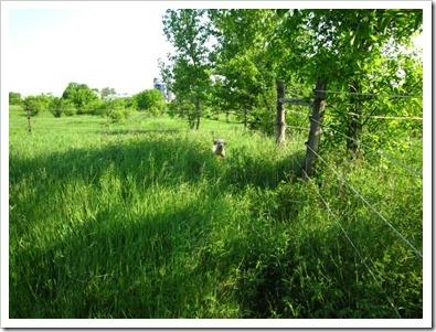 20120526_tall-grass_001